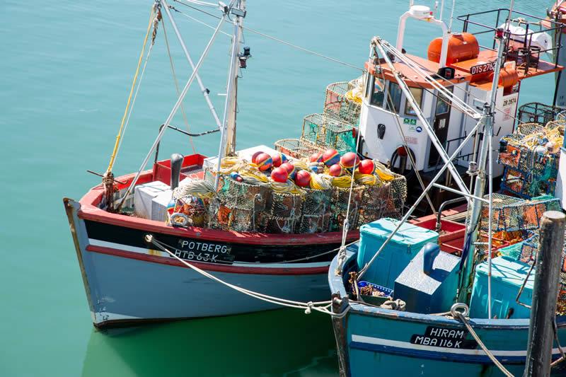 Oceana Lobster banner